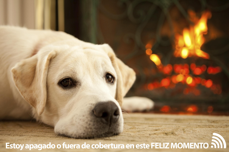 warm-dog copia