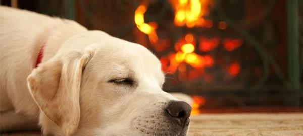 mascotas-chimeneas-medidas-seguridad